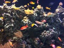 Hier vis vis Stock Afbeelding