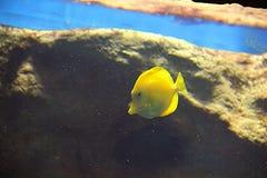 Hier vis vis stock fotografie