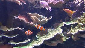 Hier vis vis Royalty-vrije Stock Afbeelding