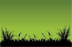 Hierba Imagen de archivo libre de regalías