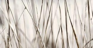 Hierba abstracta Imagenes de archivo