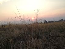 Hierba alta en el sol abajo Foto de archivo libre de regalías