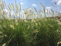 Hierba alta en paisaje con el cielo azul Fotografía de archivo