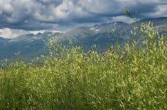 Hierba alta, flores amarillas y púrpuras con los picos de montaña borrosos y cielo nublado en el fondo Fotos de archivo libres de regalías
