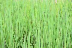 Hierba, apenas hierba Foto de archivo libre de regalías