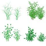 Hierba, arbustos Fotografía de archivo libre de regalías