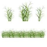 Hierba, arbustos stock de ilustración