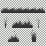 Hierba, arbustos Un sistema de diversos tipos de hierba Sistema de hierba en un fondo transparente Imagenes de archivo