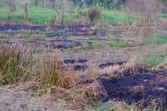 Hierba ardiendo en el área del campo con la mala hierba salvaje en la tierra y el fondo verde de la naturaleza fotos de archivo libres de regalías