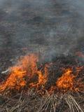 Hierba ardiente del paisaje de la primavera en un cielo azul del bosque del abedul en el humo de un fuego Foto de archivo