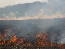 Hierba ardiente del paisaje de la primavera en un cielo azul del bosque del abedul en el humo de un fuego Imagen de archivo
