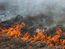 Hierba ardiente del paisaje de la primavera en un cielo azul del bosque del abedul en el humo de un fuego Imagenes de archivo
