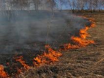 Hierba ardiente del paisaje de la primavera en un cielo azul del bosque del abedul en el humo de un fuego Imagen de archivo libre de regalías