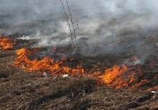 Hierba ardiente del paisaje de la primavera en un cielo azul del bosque del abedul en el humo de un fuego Fotografía de archivo libre de regalías