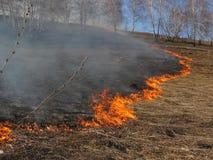 Hierba ardiente del paisaje de la primavera en un cielo azul del bosque del abedul en el humo de un fuego Fotos de archivo