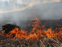 Hierba ardiente del paisaje de la primavera en un cielo azul del bosque del abedul en el humo de un fuego Imágenes de archivo libres de regalías