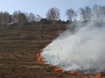 Hierba ardiente del paisaje de la primavera en un cielo azul del bosque del abedul en el humo de un fuego Foto de archivo libre de regalías
