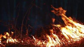 Hierba ardiente en la noche almacen de metraje de vídeo