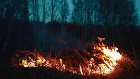 Hierba ardiente Fuego y humo almacen de video