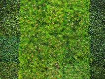 Hierba artificial con pequeñas flores rojas Foto de archivo libre de regalías