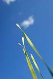 Hierba bajo el cielo azul foto de archivo