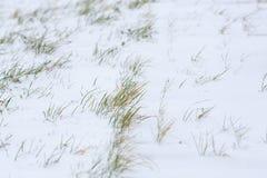 Hierba bajo la nieve Foto de archivo