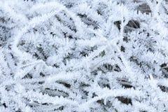 Hierba blanca de la cubierta de los cristales de la helada Imagen de archivo libre de regalías