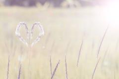 Hierba blanca del corazón Fotos de archivo