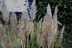 Hierba blanca del invierno que brilla intensamente en la luz del sol foto de archivo