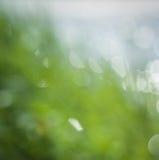 Hierba borrosa del color de la primavera Foto de archivo