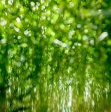 Hierba borrosa del color de la primavera Imagen de archivo