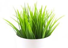 Hierba brillante verde en el pote blanco imagenes de archivo