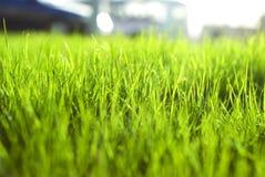 Hierba brillante vibrante verde Foto de archivo libre de regalías