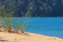 Hierba brillantemente coloreada de la duna Imagen de archivo libre de regalías