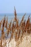 Hierba castaña en la playa. Imagen de archivo