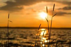 Hierba cerca del lago con el cielo y el horizonte en la puesta del sol foto de archivo libre de regalías