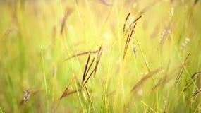 Hierba cercana para arriba en el tiempo soleado, naturaleza, bokeh imagenes de archivo