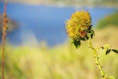 Hierba cercana para arriba en el tiempo soleado, naturaleza, bokeh Fotografía de archivo
