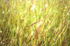 Hierba cercana para arriba en tiempo soleado Foto de archivo