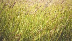 Hierba cercana para arriba en tiempo soleado Imagen de archivo