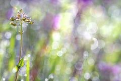 Hierba coloreada brillante en el rocío en el sol de la mañana Imagen de archivo libre de regalías