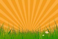 Hierba con efecto de la explosión del sol stock de ilustración