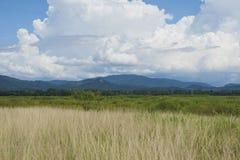 Hierba con el cielo azul de las nubes Imagen de archivo libre de regalías