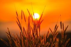 Hierba con el sol Imagen de archivo libre de regalías