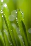 Hierba con gotas del agua Fotografía de archivo libre de regalías