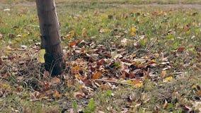 Hierba con las hojas caidas alrededor de oscilaciones del tronco de árbol en viento almacen de video