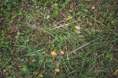 Hierba con las hojas, visión superior del bosque del otoño Espacio para el texto Fondo imagen de archivo libre de regalías