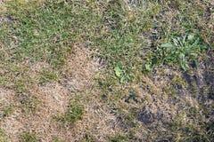 Hierba con los remiendos calvos y secos Imagen de archivo