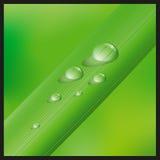 Hierba con los waterdrops Foto de archivo libre de regalías