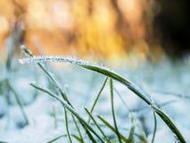 Hierba congelada Foto de archivo libre de regalías